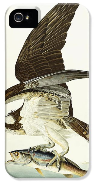 Osprey iPhone 5 Case - Fish Hawk by John James Audubon