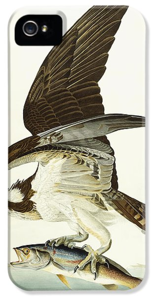Fish Hawk IPhone 5 Case by John James Audubon