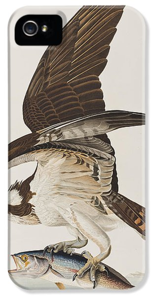 Osprey iPhone 5 Case - Fish Hawk Or Osprey by John James Audubon