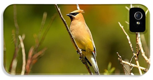 Fishercap Cedar Waxwing IPhone 5 / 5s Case by Adam Jewell