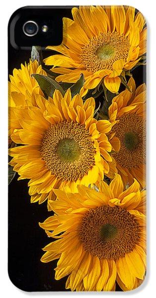 Five Sunflowers IPhone 5 Case