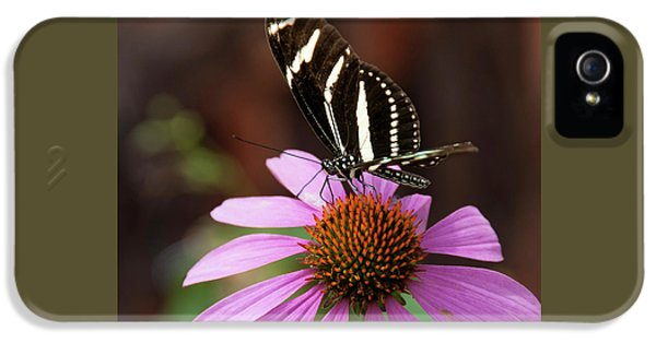 Flagstaff Butterfly IPhone 5 Case by Jan and Burt Williams