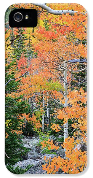 IPhone 5 Case featuring the photograph Flaming Forest by David Chandler