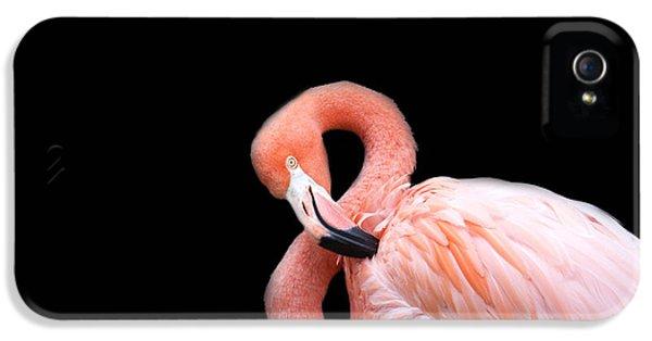 Flamingo 3 IPhone 5 Case