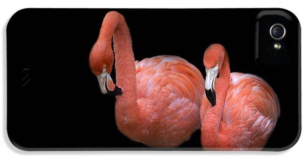 Flamingo 4 IPhone 5 Case