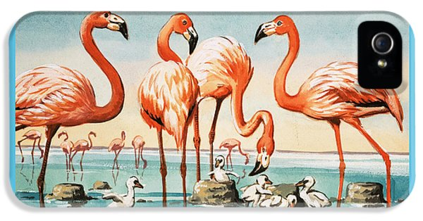 Flamingoes IPhone 5 Case