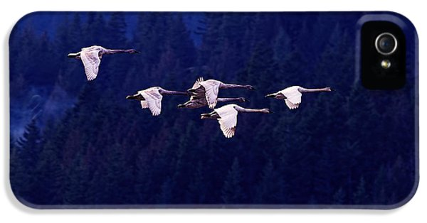 Flight Of The Swans IPhone 5 / 5s Case by Sharon Talson