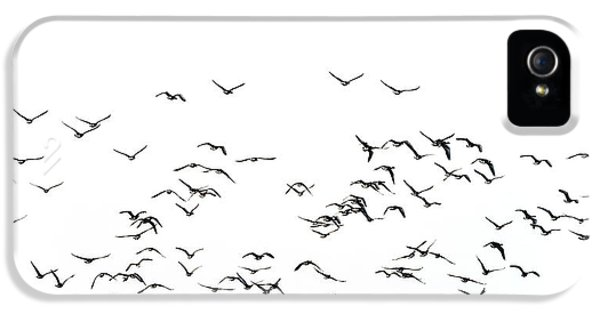Flock Of Beautiful Migratory Lapwing Birds In Clear Winter Sky I IPhone 5 Case by Matthew Gibson