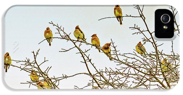 Flock Of Cedar Waxwings  IPhone 5 Case