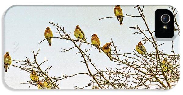 Flock Of Cedar Waxwings  IPhone 5 Case by Geraldine Scull