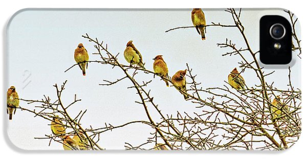 Flock Of Cedar Waxwings  IPhone 5 / 5s Case by Geraldine Scull