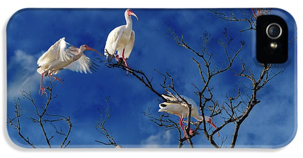 Ibis iPhone 5 Case - Florida Keys The Exaggerated Ibis by Betsy Knapp