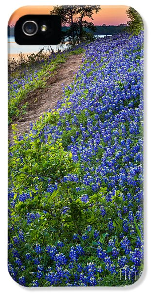 Bluebonnets iPhone 5 Case - Flower Mound by Inge Johnsson