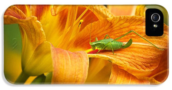 Flower With Company IPhone 5 Case by Christina Rollo