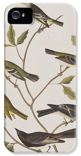 Fly Catchers IPhone 5 Case by John James Audubon