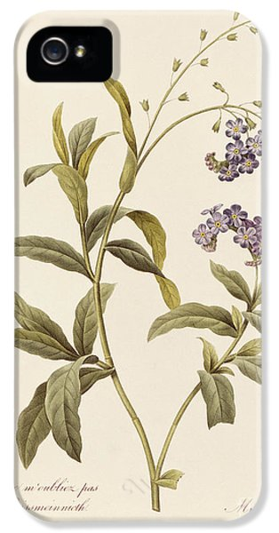 Forget Me Not IPhone 5 Case by Pierre Joseph Redoute