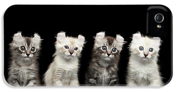 Cat iPhone 5 Case - Four American Curl Kittens With Twisted Ears Isolated Black Background by Sergey Taran