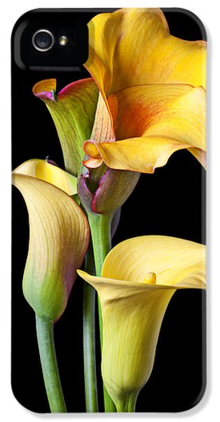 Lily iPhone 5 Case - Four Calla Lilies by Garry Gay
