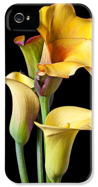 Four Calla Lilies IPhone 5 Case by Garry Gay