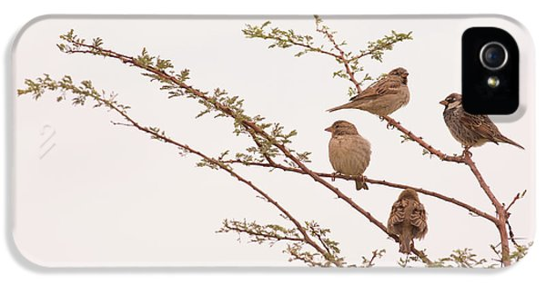 four House sparrows Passer domesticus IPhone 5 Case by Alon Meir