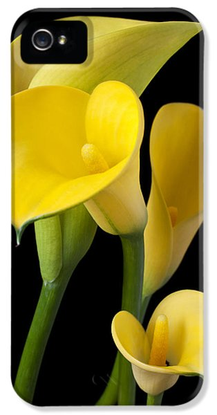 Lily iPhone 5 Case - Four Yellow Calla Lilies by Garry Gay
