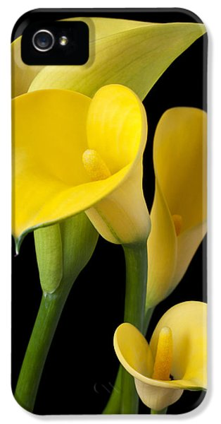 Four Yellow Calla Lilies IPhone 5 Case by Garry Gay