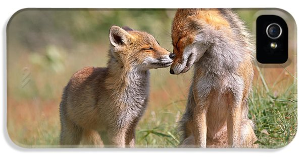 Fox Felicity II - Mother And Fox Kit Showing Love And Affection IPhone 5 Case