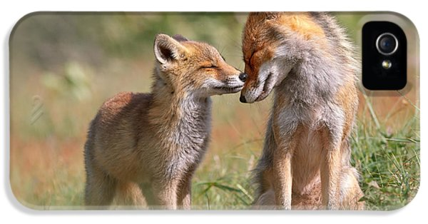 Fox Felicity II - Mother And Fox Kit Showing Love And Affection IPhone 5 Case by Roeselien Raimond