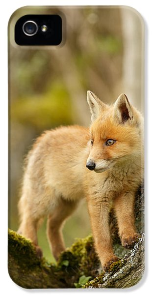 Fox Kit In A Tree IPhone 5 Case by Roeselien Raimond