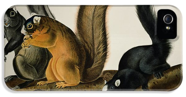 Fox Squirrel IPhone 5 / 5s Case by John James Audubon