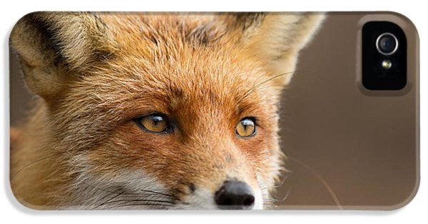 Foxy Face - Red Fox Portrait IPhone 5 Case