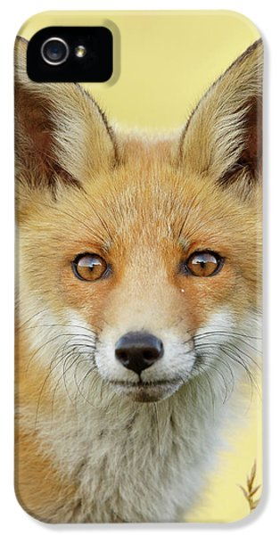 Foxy Faces Series- Young And Eager Fox IPhone 5 Case