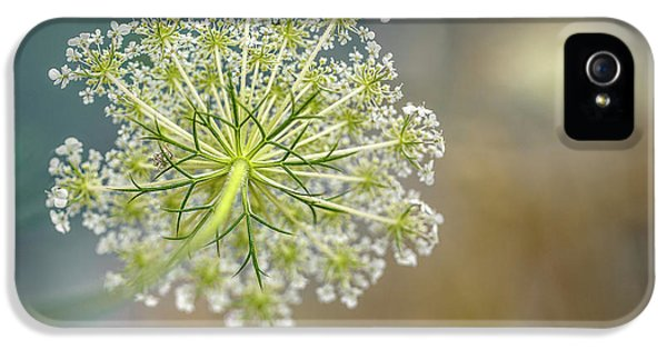 Fragile Dill Umbels On Summer Meadow IPhone 5 Case