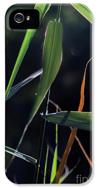 IPhone 5 Case featuring the photograph Fragment by Linda Lees
