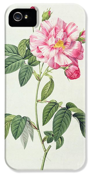 French Rose IPhone 5 Case