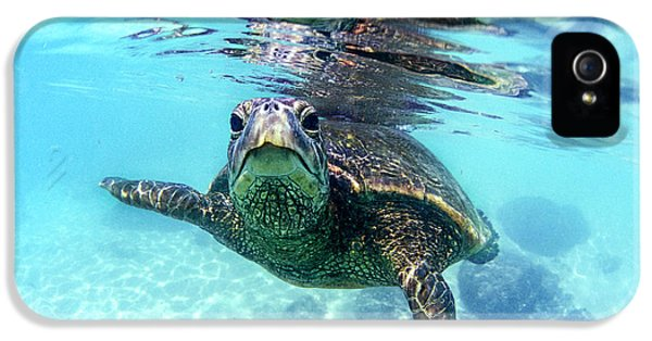 Turtle iPhone 5 Case - friendly Hawaiian sea turtle  by Sean Davey