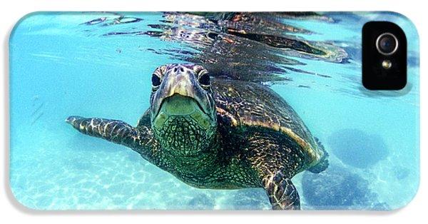 friendly Hawaiian sea turtle  IPhone 5 Case by Sean Davey