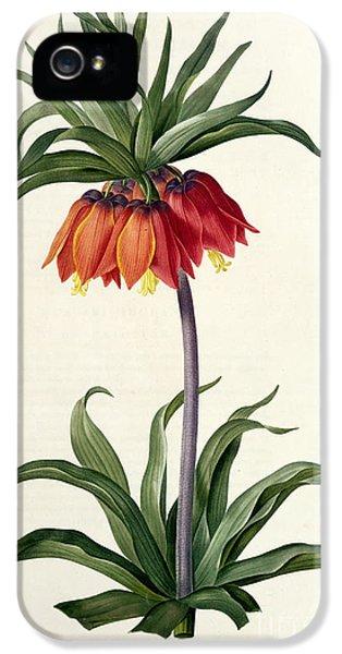 Fritillaria Imperialis IPhone 5 Case