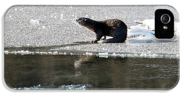 Frosty River Otter  IPhone 5 Case by Mike Dawson