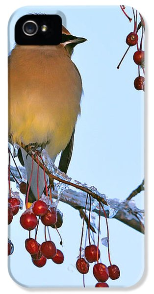 Frozen Dinner  IPhone 5 Case by Tony Beck