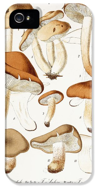 Fungi IPhone 5 Case by Jean-Baptiste Barla