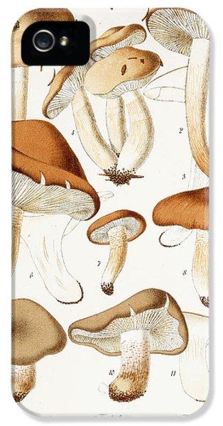 Fungi IPhone 5 Case by Jean-Baptiste Barla