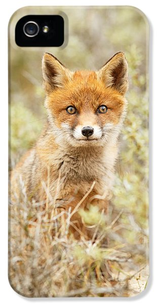 Funny Face Fox IPhone 5 Case