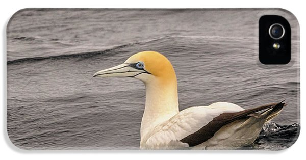 Gannet 5 IPhone 5 Case