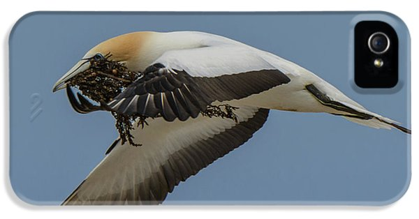 IPhone 5 Case featuring the photograph Gannets 1 by Werner Padarin