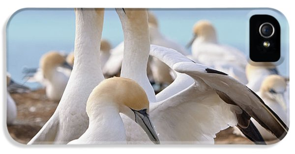 IPhone 5 Case featuring the photograph Gannets by Werner Padarin