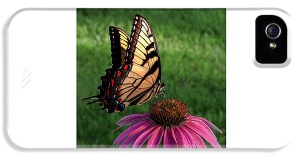 Garden Dancer IPhone 5 Case by Don Spenner