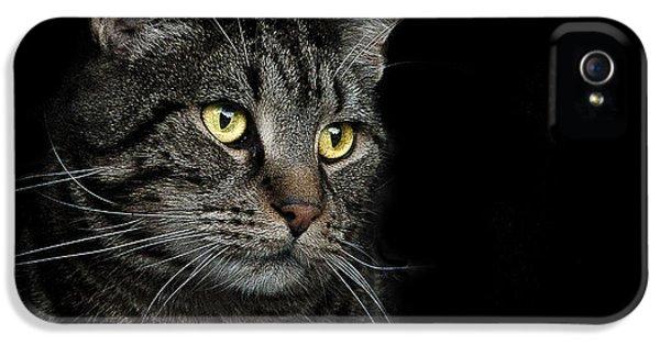 Cats iPhone 5 Case - Gaze  by Paul Neville