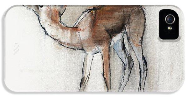 Gazelle Fawn  Arabian Gazelle IPhone 5 Case by Mark Adlington