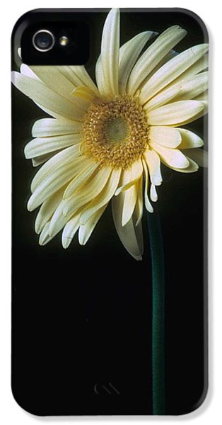 Daisy iPhone 5 Case - Gerber Daisy by Laurie Paci